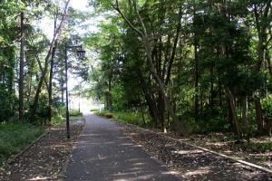 林の中の整備された散歩道