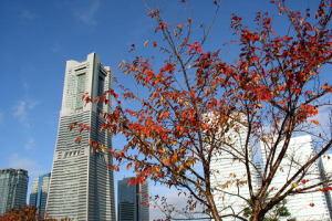 ランドマークと桜の紅葉