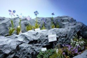 高山植物コーナーの花